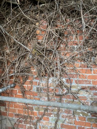 Old Bird Nest Wildlife